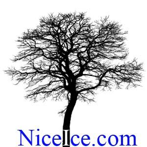 Tree Silhouette NiceIce.com