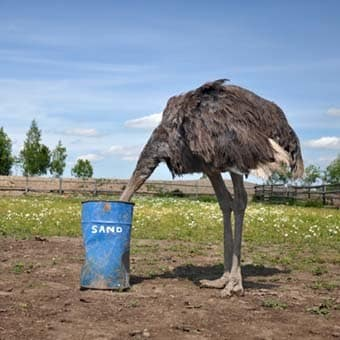 Ostrich with head in sand