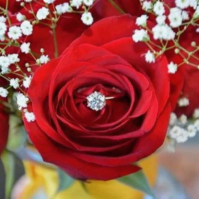 Red Rose Solitaire Diamond Engagement Ring.