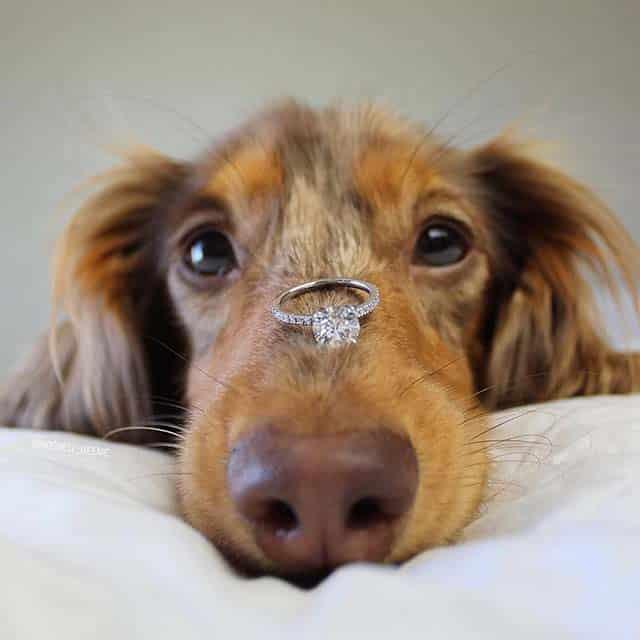 Brilliant Earth Review Cute Dog Proposals.